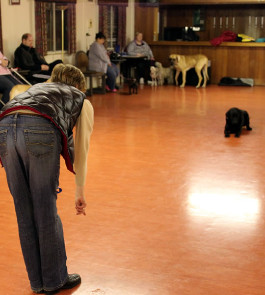 Dog Training Fife